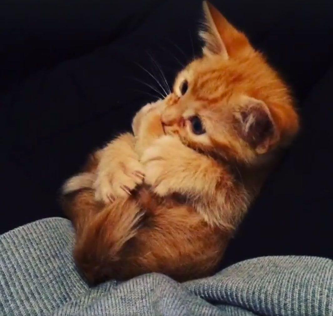 gato-mordiendo-su-cola-01