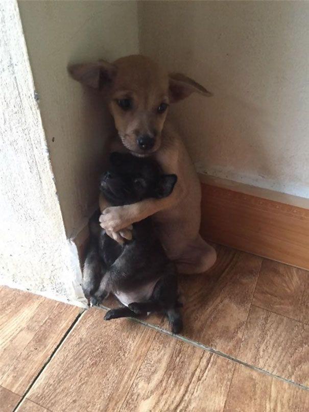 perros-abrazados-01
