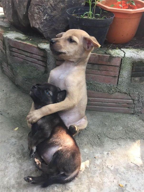 perros-abrazados-02