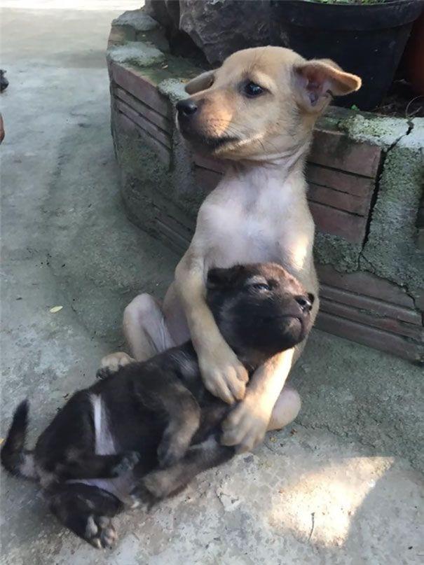perros-abrazados-03