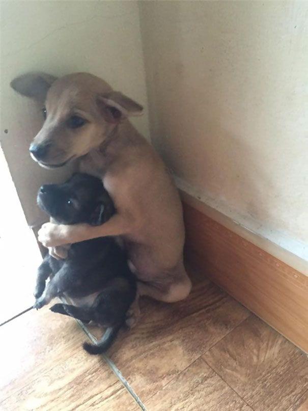 perros-abrazados-04