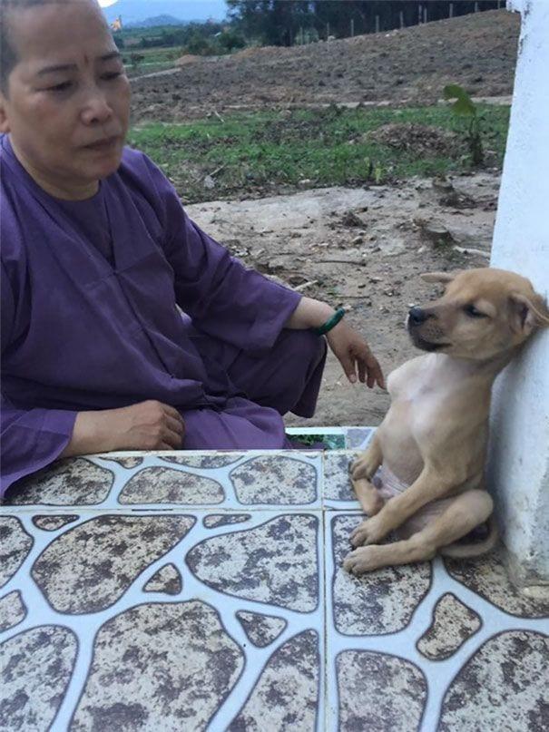 perros-abrazados-08