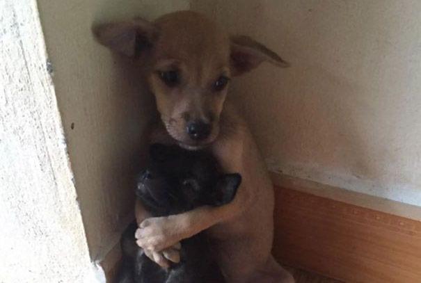 perros abrazados destacada