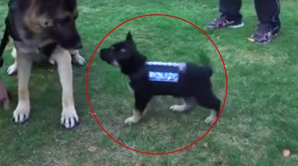 perros policia destacada