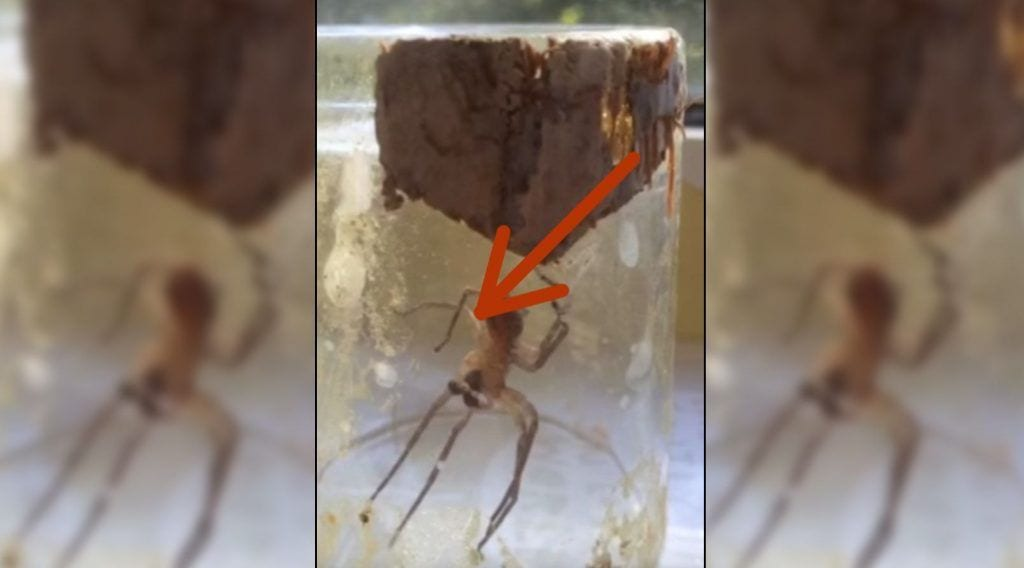 spider destacada