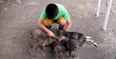 ayuda animales2