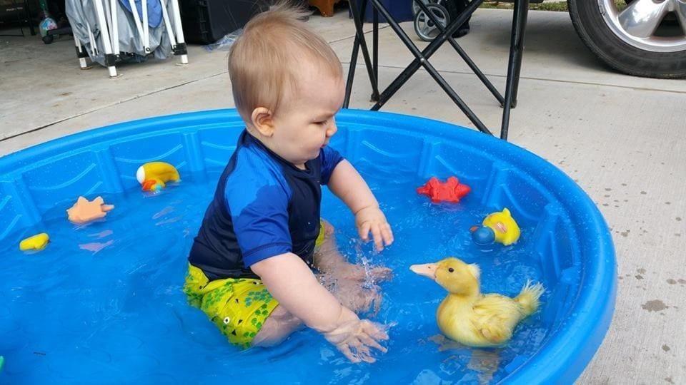 beb-con-pato