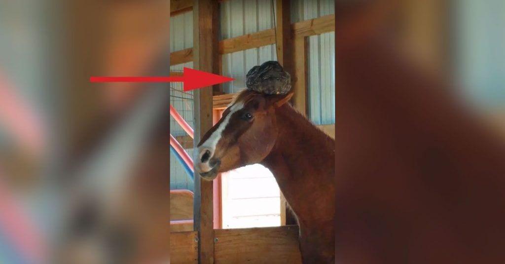 caballo sombrero gallina dest