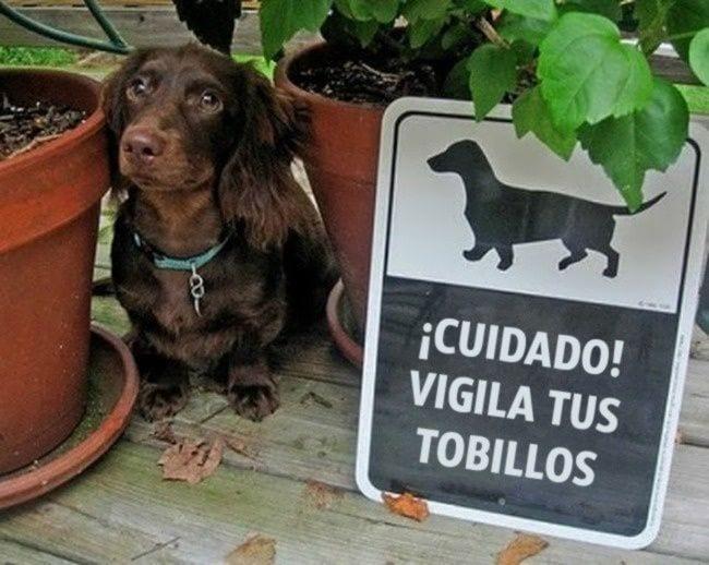 cuidado-con-el-perro11