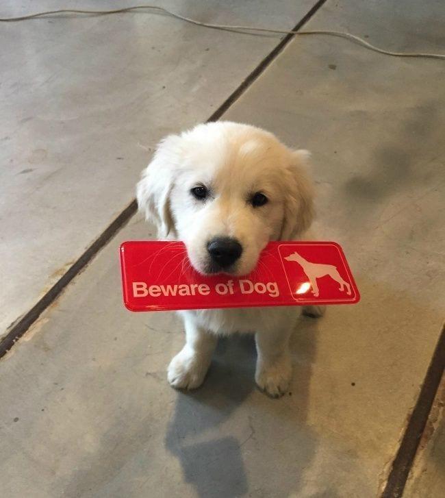 cuidado-con-el-perro12