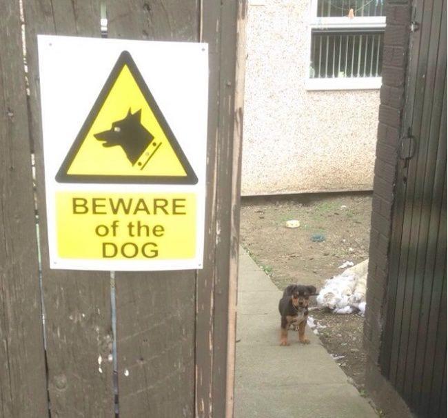 cuidado-con-el-perro3
