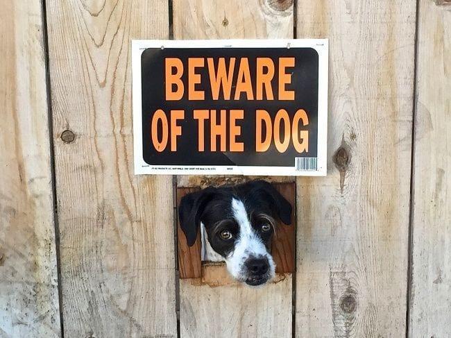 cuidado-con-el-perro7