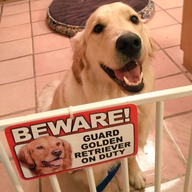 cuidado-con-el-perro9