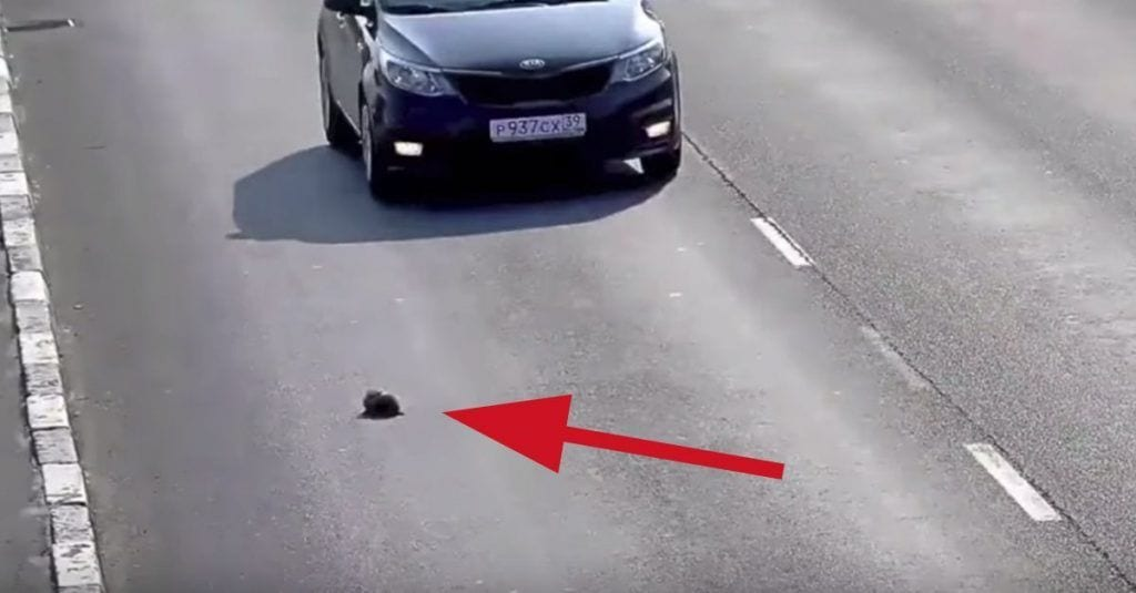 gato autopista salvado