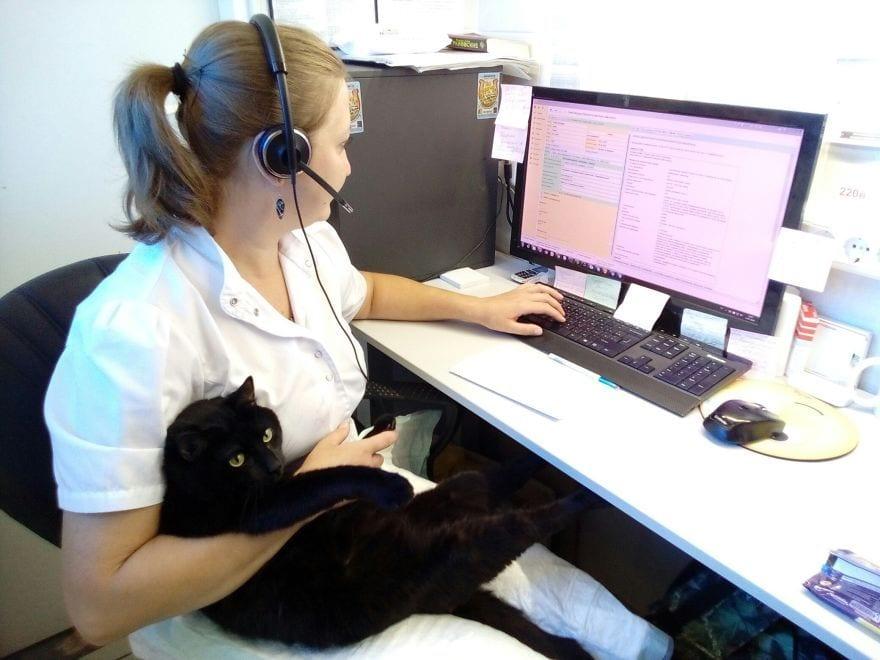gato-enfermero0S9J6-xWxHY-57d0903c8fb02__880gato-enfermero