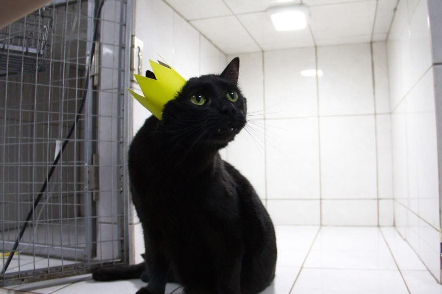 gato-enfermero7tZByLysV2w-57d08fbd0b49f__880gato-enfermero