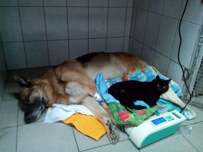 gato enfermeroMm3FspxML2U 57d0905d1b597  880gato enfermero
