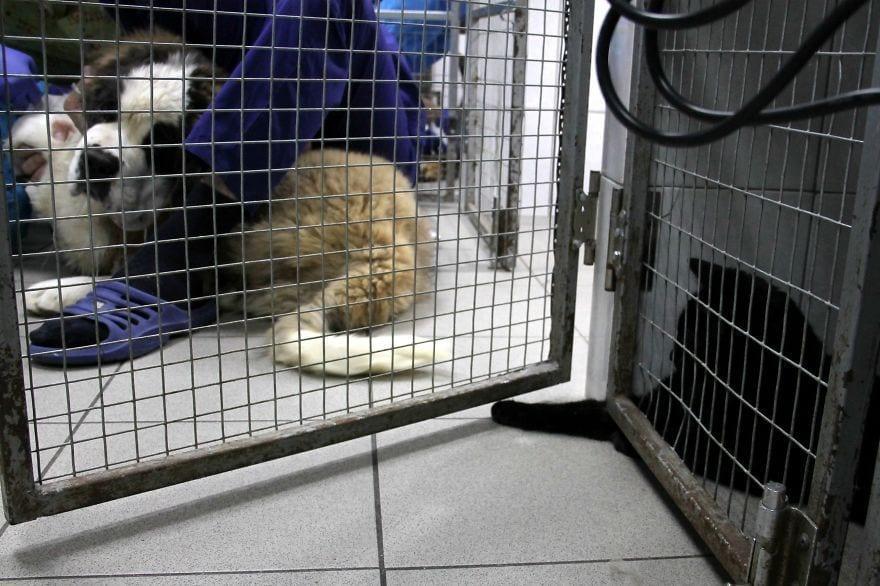 gato-enfermeroXOch_AQLxjU-57d08ffb8637a__880gato-enfermero