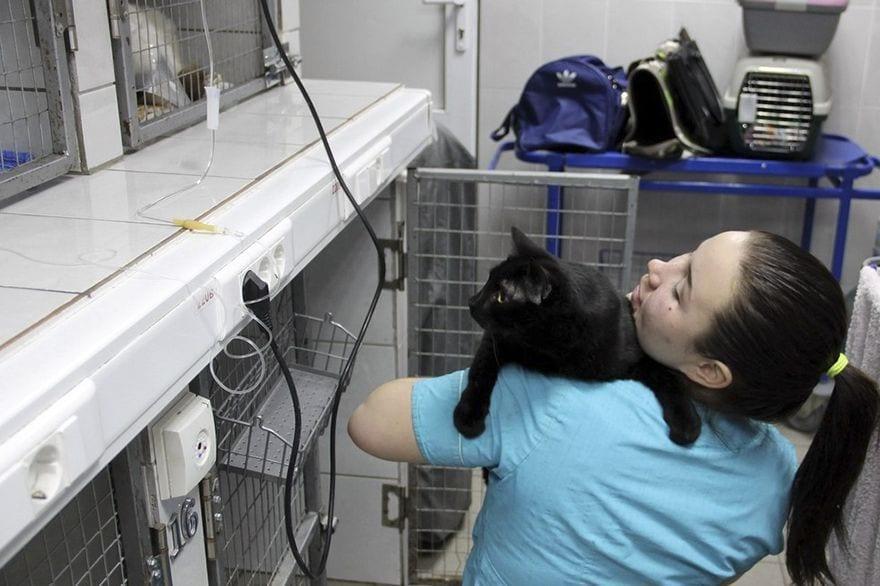 gato-enfermeroadopted-doctor-cat-helping-animals-juliya-abramovagato-enfermero