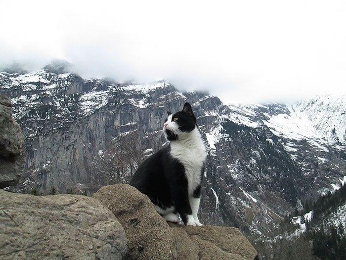 gato guia3