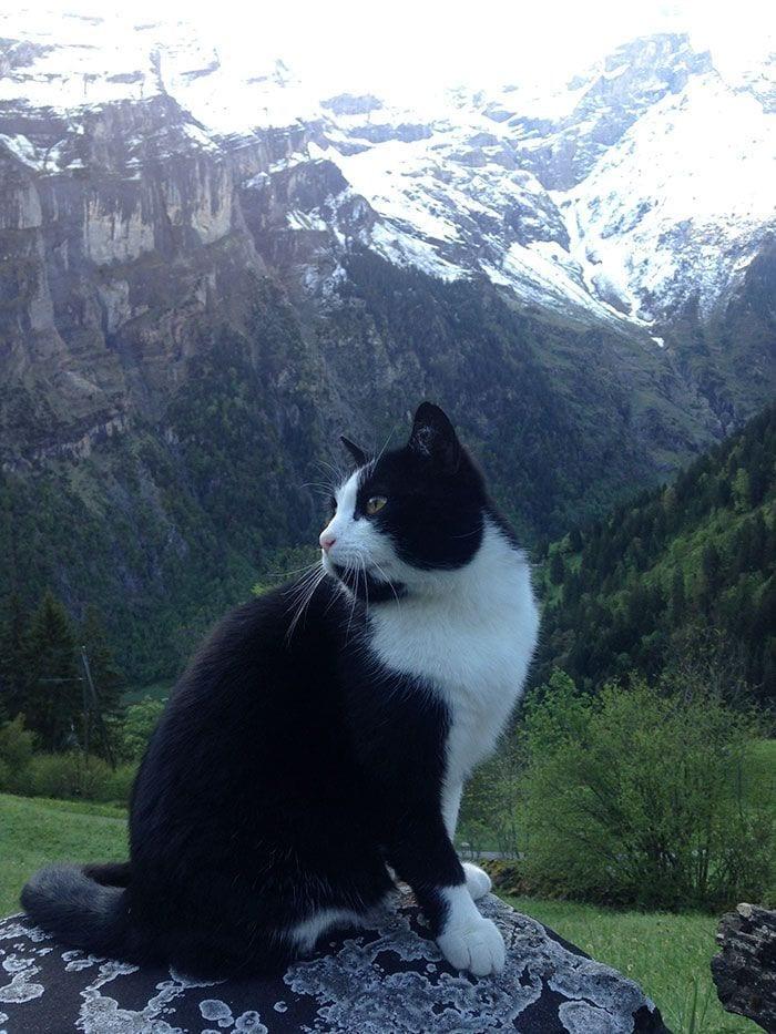 gato-guia5