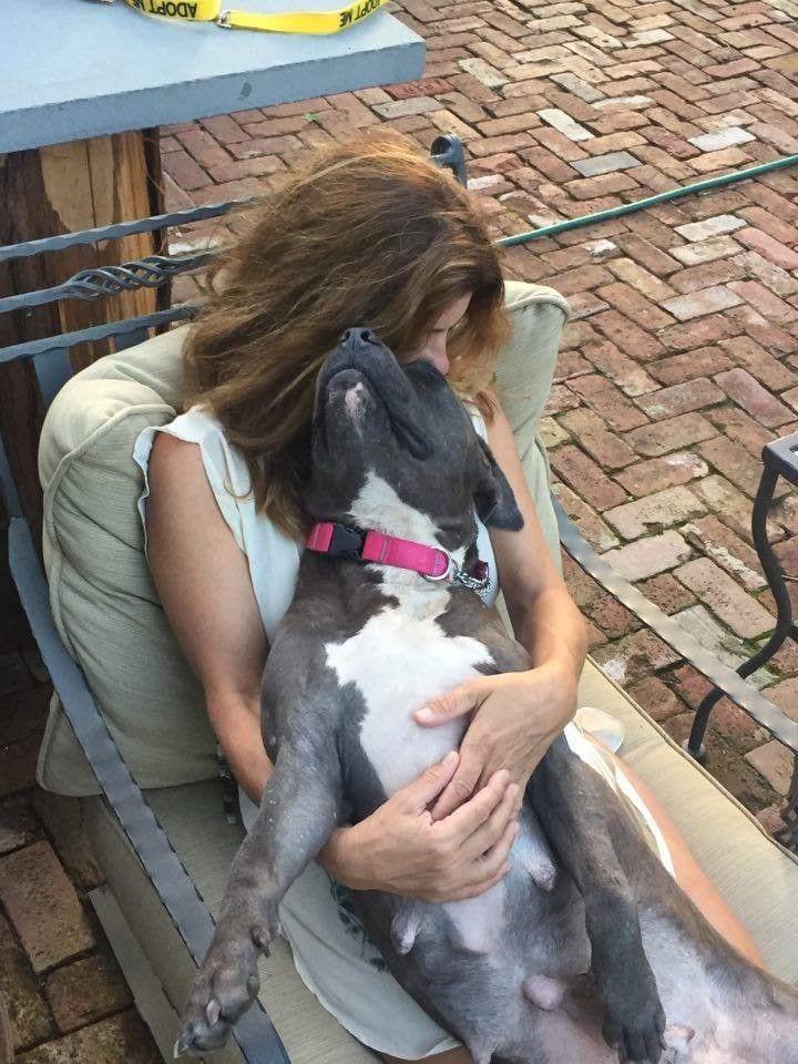 mama-pitbull-adopta4