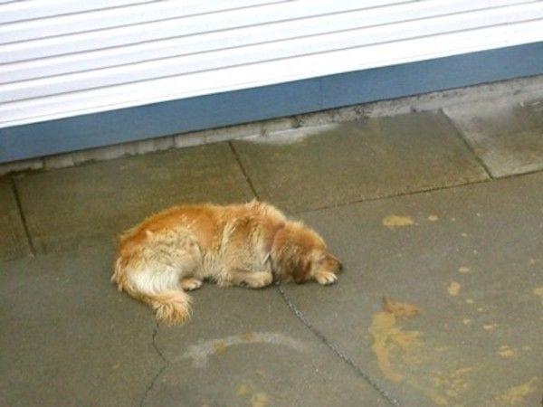 perro-atado-rescatado1