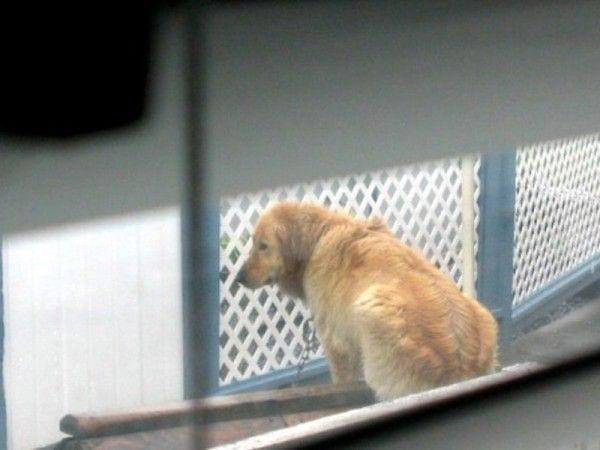 perro-atado-rescatado4