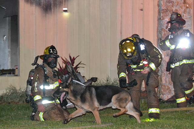 perro ayuda incendio3
