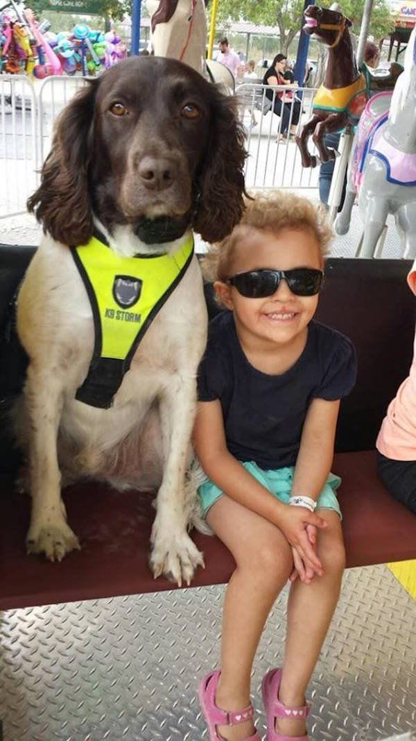 perro-callejero-cuidador-epilesia1