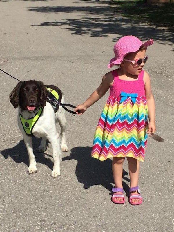 perro-callejero-cuidador-epilesia2