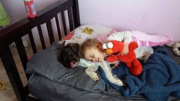 perro-callejero-cuidador-epilesia3
