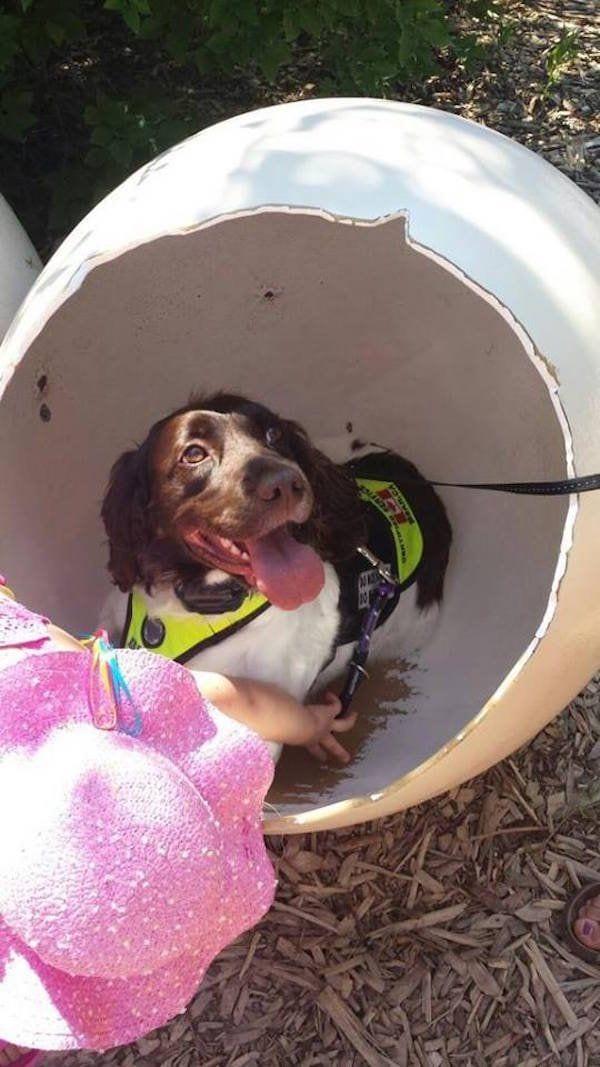 perro-callejero-cuidador-epilesia6