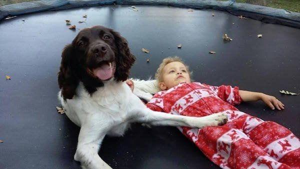perro callejero cuidador epilesia7