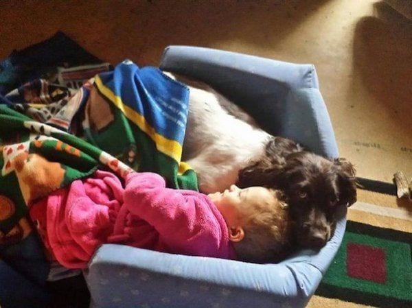 perro-callejero-cuidador-epilesia8