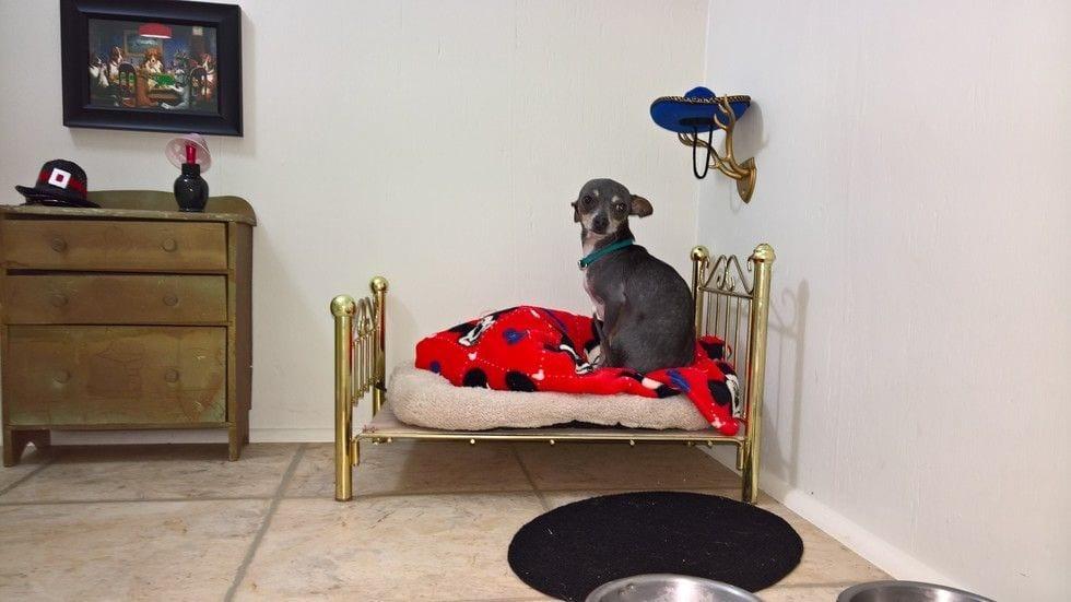 perro habitacion3