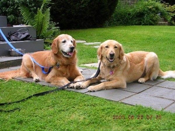 perro-rescatado-atado