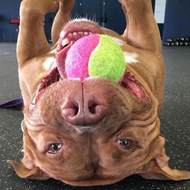 perro-sonrie-adoptado1
