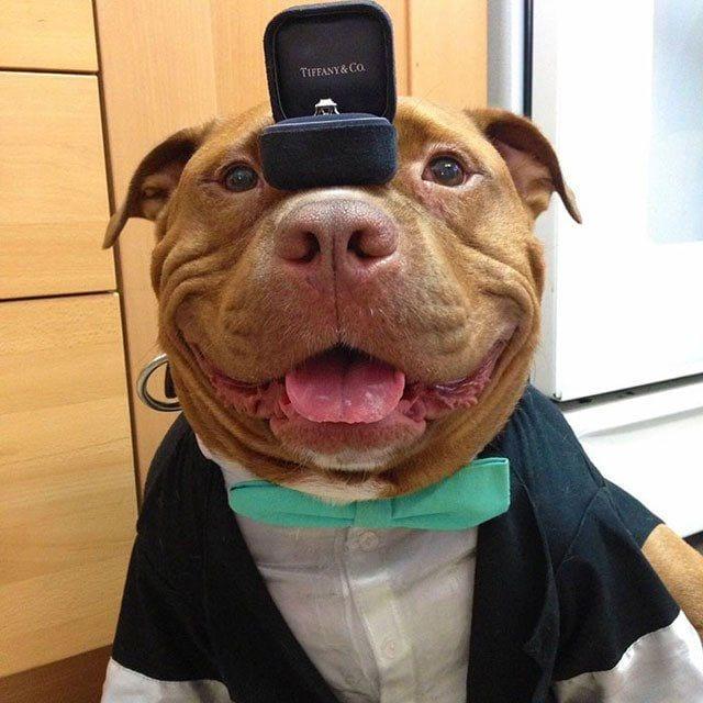 perro-sonrie-adoptado3