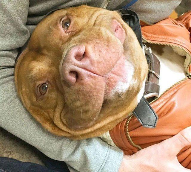 perro-sonrie-adoptado7