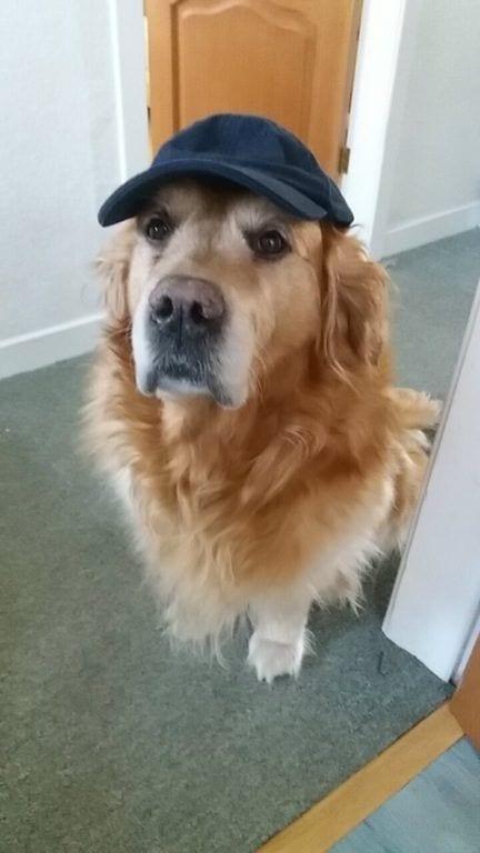 perros-aman-verano1