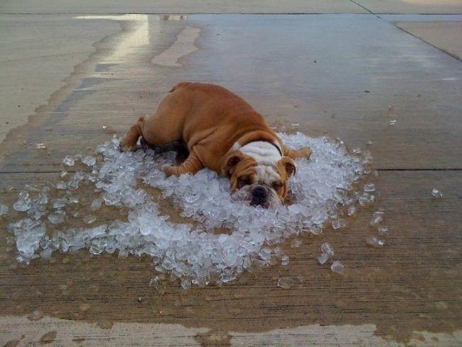 perros-aman-verano11