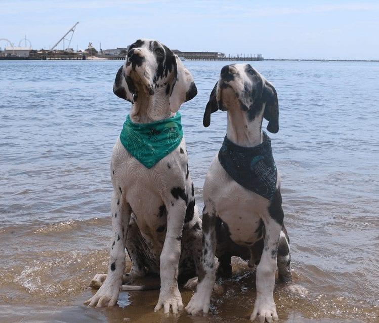 perros-aman-verano12