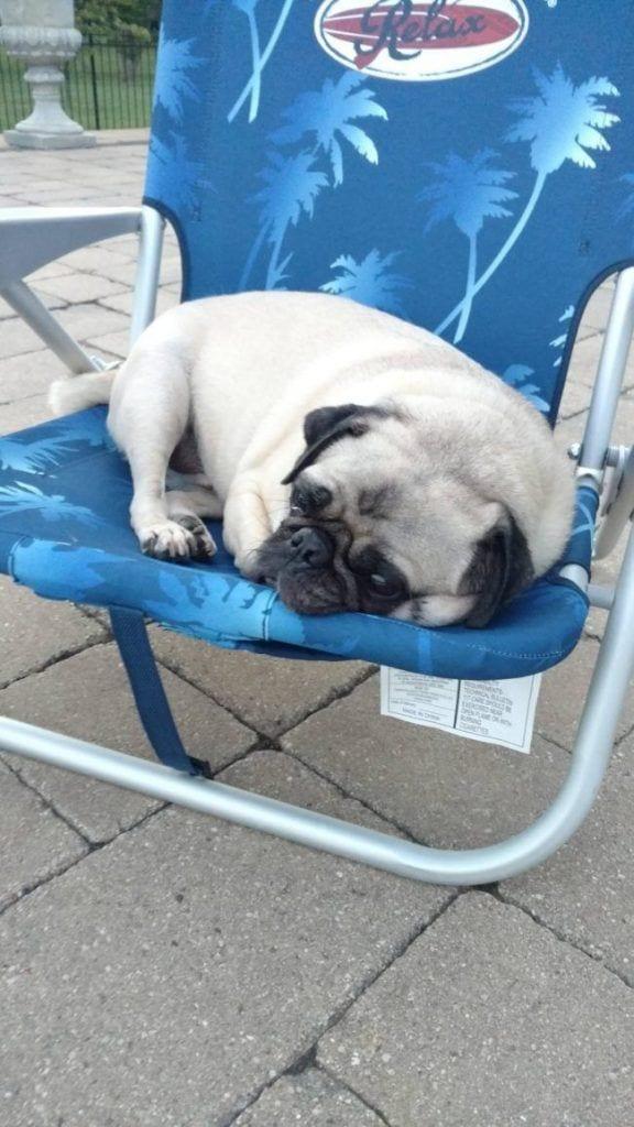 perros-aman-verano14