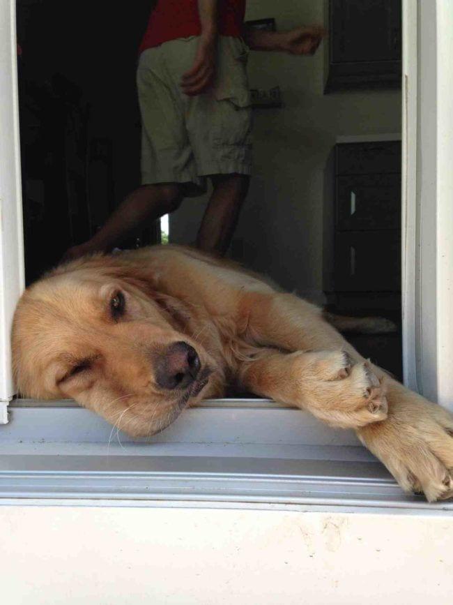perros-aman-verano15