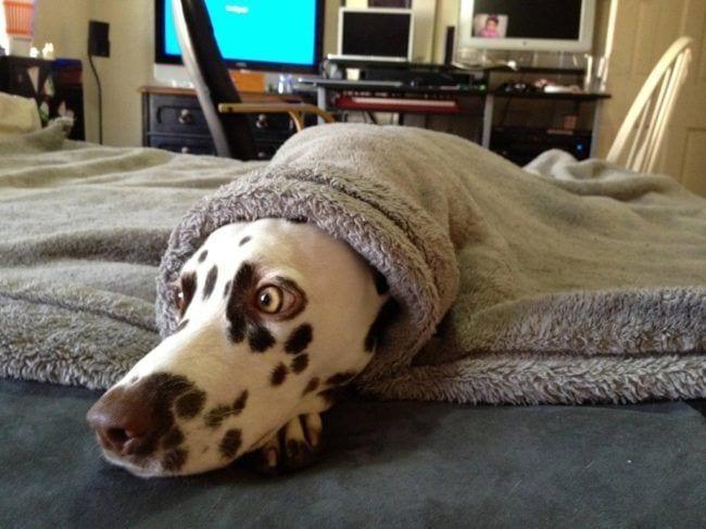 perros-aman-verano16