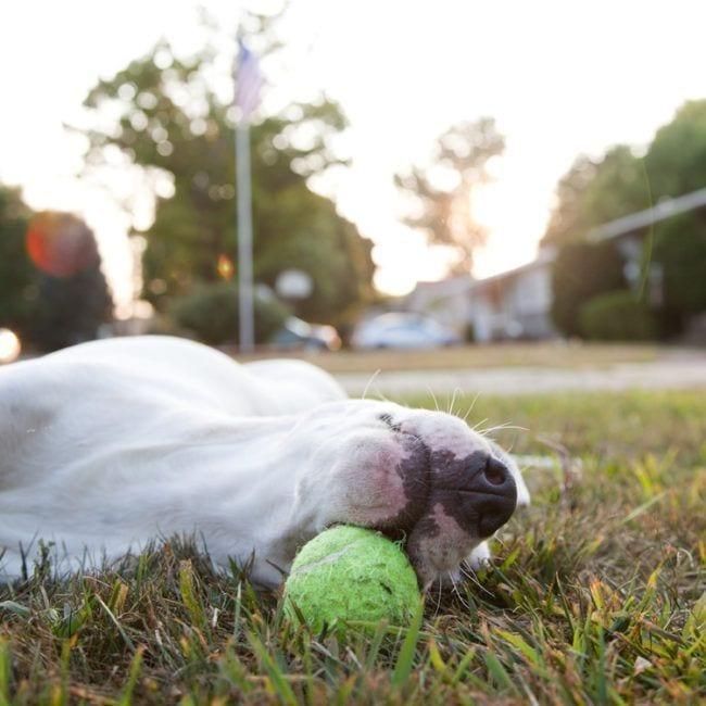 perros-aman-verano17