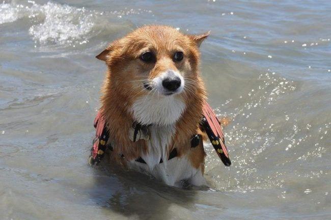 perros-aman-verano2