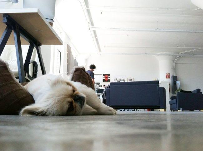 perros-aman-verano3