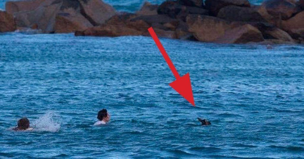 rescate canguro mar